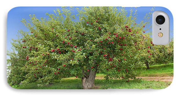 Large Apple Tree IPhone Case by Anthony Sacco