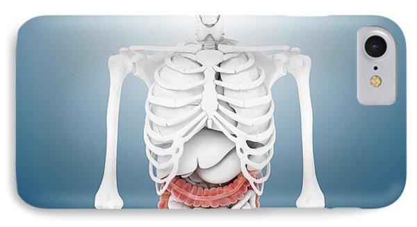 Large Intestine And Skeleton IPhone Case