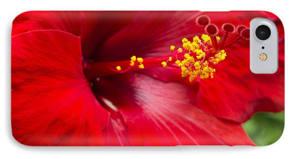IPhone Case featuring the photograph Large Red Hibiscus by Leigh Anne Meeks