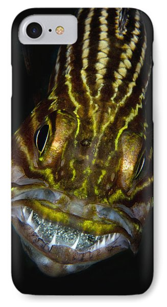 Large-toothed Cardinalfish Brooding IPhone Case by Dray van Beeck