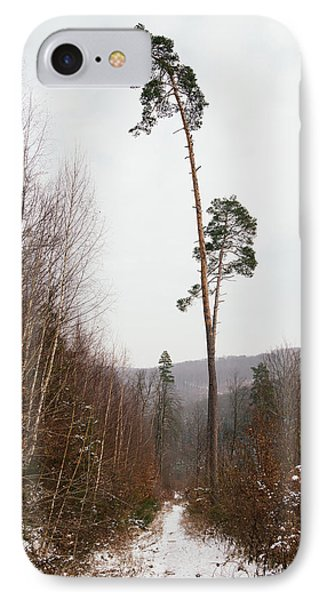 Large Trees In The Nature Park In Winter Phone Case by Matthias Hauser