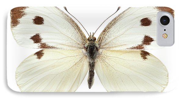Large White IPhone Case by Natural History Museum, London