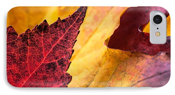 IPhone Case featuring the photograph Last Days Of Fall by Crystal Hoeveler