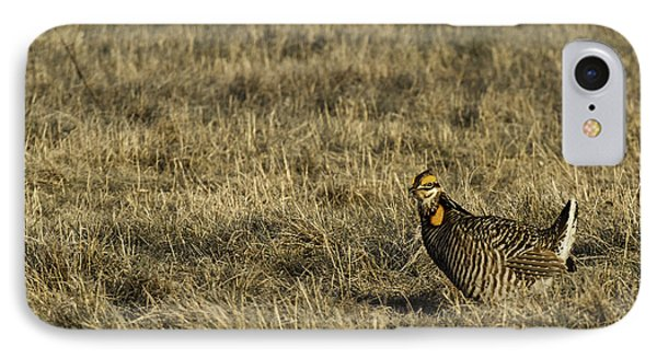 Last Prairie Chicken On The Booming Grounds  IPhone Case by Thomas Young