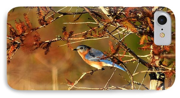 Late Fall Bluebird IPhone Case by Theresa Willingham