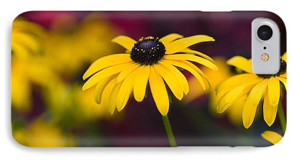 Late Summer Rudbeckia  IPhone Case