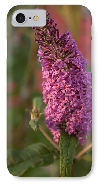 Late Summer Wildflowers IPhone Case by Miguel Winterpacht