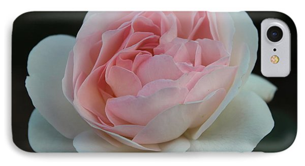 Late Summer's Rose IPhone Case by Patricia Hiltz