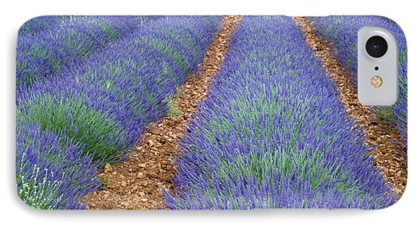 Lavendel 2 Phone Case by Arterra Picture Library