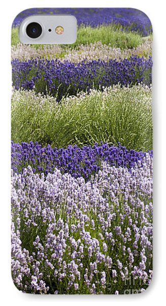 Lavender Bands Phone Case by Anne Gilbert