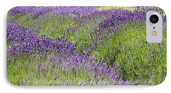 Lavender Day IPhone Case
