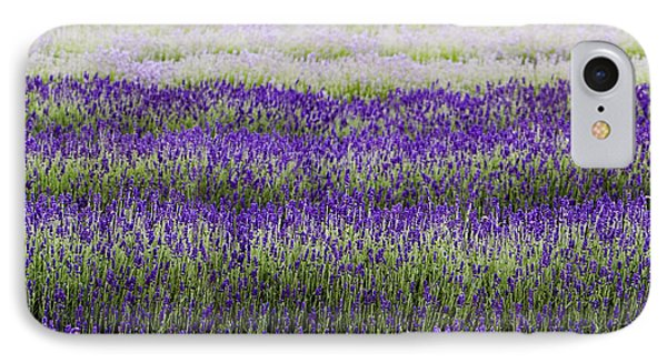 Lavender Lines  IPhone Case by Tim Gainey