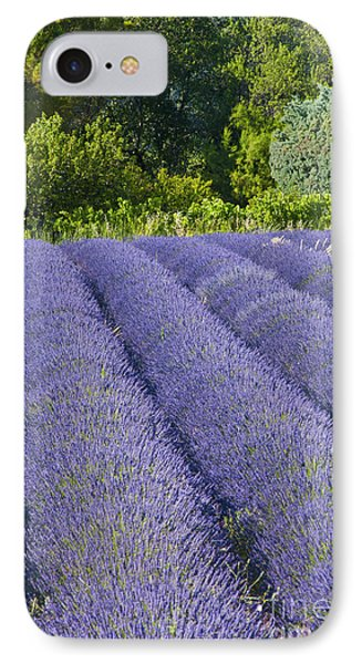 Lavender Rows Phone Case by Bob Phillips