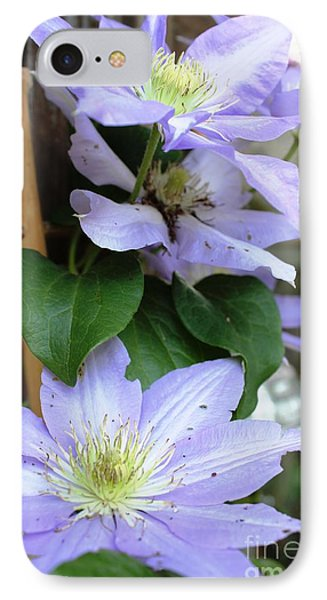 IPhone Case featuring the photograph Lavender Star by Judy Palkimas