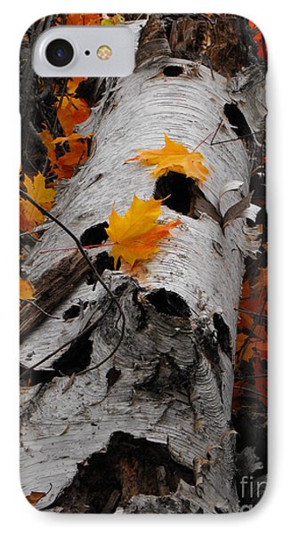 Laying Birch IPhone Case by Erick Schmidt