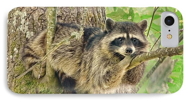 Lazy Day Raccoon IPhone Case by Jennie Marie Schell