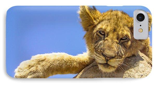 Lazy Lion Phone Case by Diane Diederich