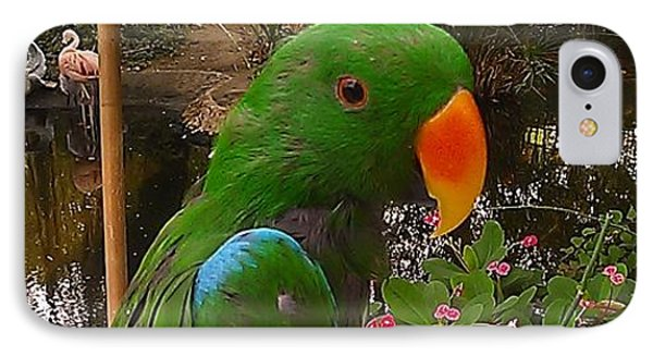 Le Parrot IPhone Case by Chris Tarpening