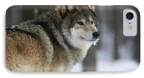 Leader Of The Pack Phone Case by Inspired Nature Photography Fine Art Photography