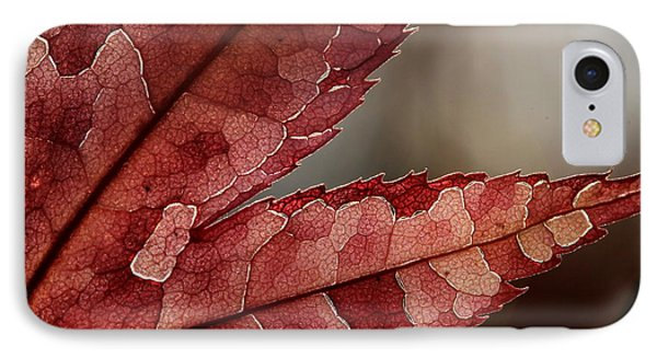 IPhone Case featuring the photograph Leaf Detail by Kenny Glotfelty