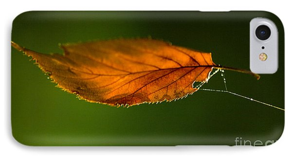 Leaf On Spiderwebstring IPhone Case