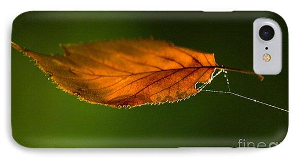 Leaf On Spiderwebstring IPhone Case by Iris Richardson
