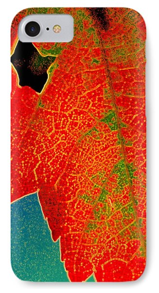 IPhone Case featuring the photograph Leaf Pop by Kathy Bassett