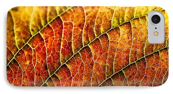 Leaf Rainbow IPhone Case by Crystal Hoeveler