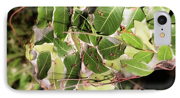 Leaf-stitching Ants Making A Nest IPhone Case by Tony Camacho