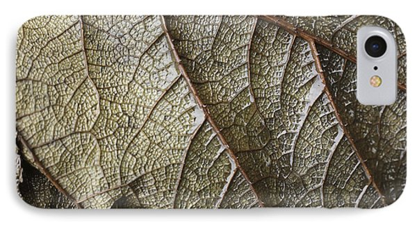 Leaf Vein Abstract IPhone Case by Paul Cowan