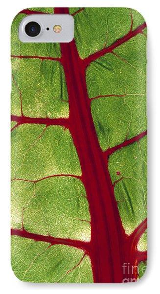 Leaf Veins IPhone Case