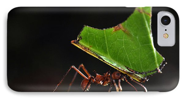 Leafcutter Ant IPhone Case by Francesco Tomasinelli