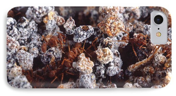Leafcutter Ant Fungus Garden IPhone Case by Gregory G. Dimijian