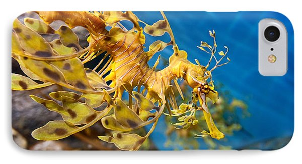 Leafy Sea Dragon Phycodurus Eques. IPhone Case by Jamie Pham
