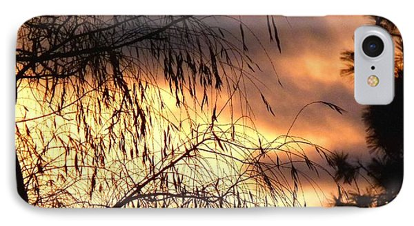 Leaning Willow Silhouette IPhone Case by Will Borden