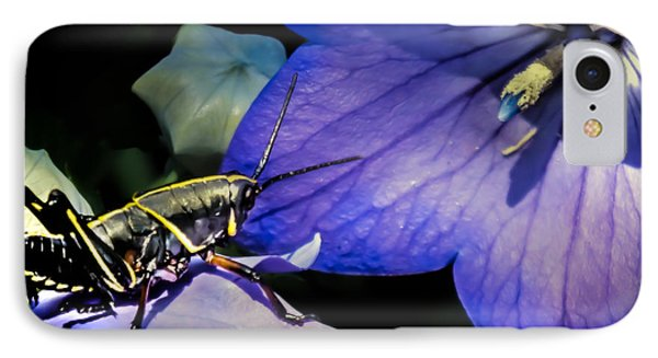 Contemplation Of A Pistil IPhone Case by Karen Wiles