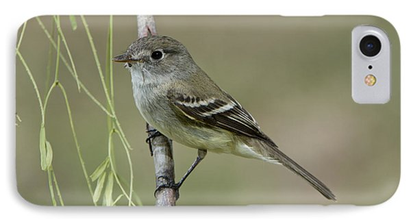 Least Flycatcher IPhone Case by Anthony Mercieca