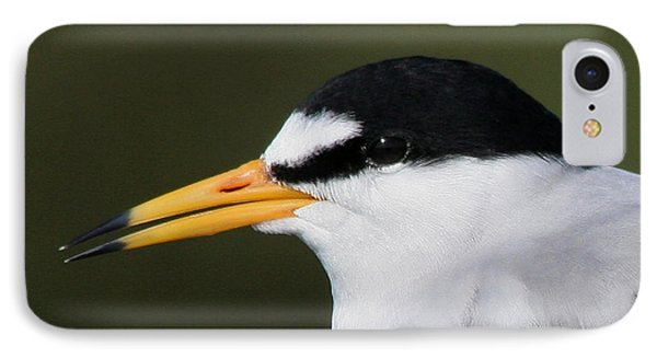IPhone Case featuring the photograph Least Tern Portrait by Bob and Jan Shriner
