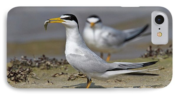 Least Tern (sterna Antillarum, Offering IPhone Case by Larry Ditto