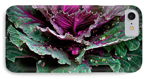 Decorative Cabbage After Rain Photograph IPhone Case by Walt Foegelle