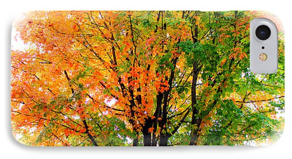 Leaves Changing Colors IPhone Case by Cynthia Guinn