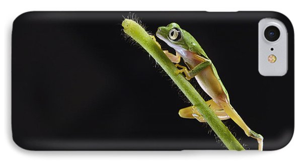 Lemur Leaf Frog IPhone Case by Marianne Brouwer