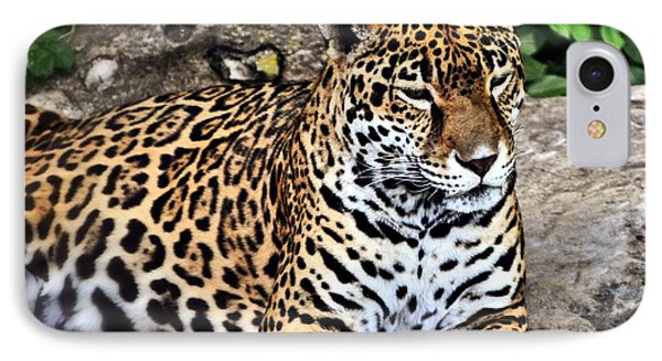 Leopard At Rest Phone Case by Marty Koch