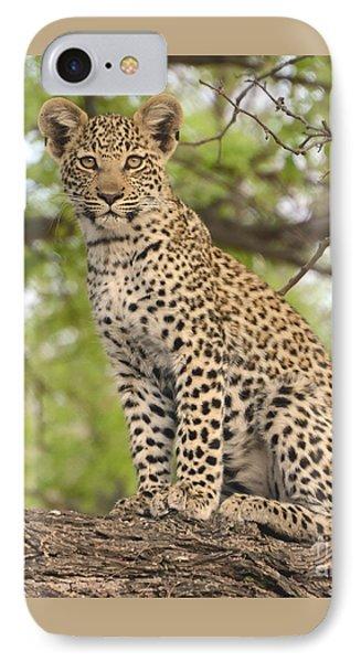 Leopard Cub Gaze IPhone Case by Tom Wurl