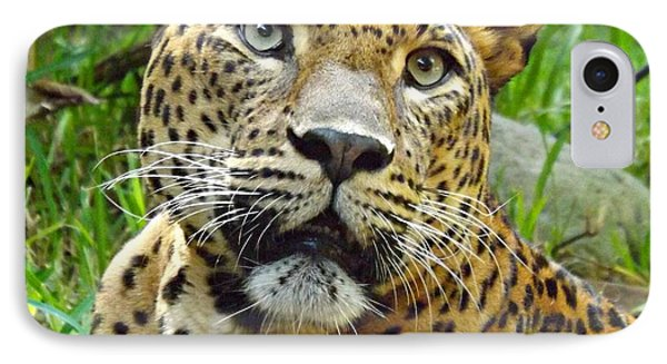 IPhone Case featuring the photograph Leopard Face by Clare Bevan