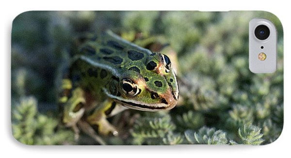 Leopard Frog In Wooly Thyme IPhone Case