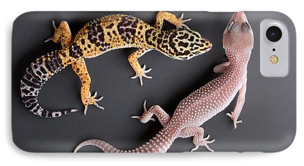 Leopard Gecko E. Macularius Collection IPhone Case by David Kenny