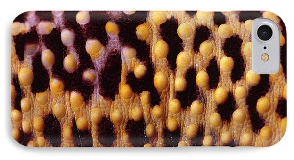 Leopard Gecko Skin IPhone Case by Nigel Downer