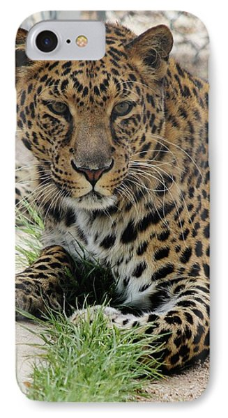 Leopard Lounging 1 IPhone Case