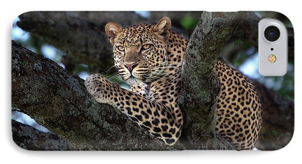 Leopard Male In A Tree In The Serengeti Phone Case by Maggy Meyer